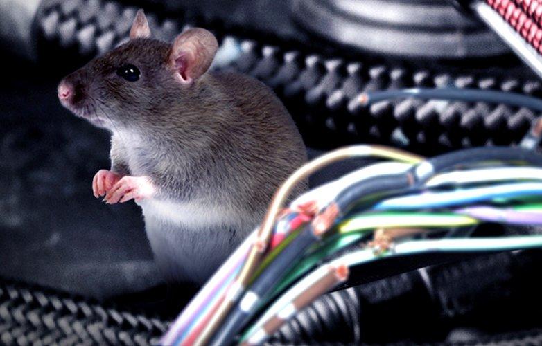 Kinh nghiệm chống chuột trên xe tải hiệu quả - Ô Tô Hoàng Long